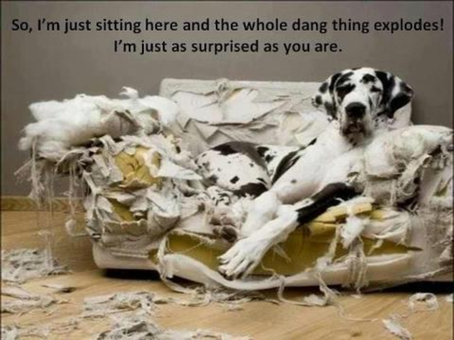 dog-destroys-couch-funny.png